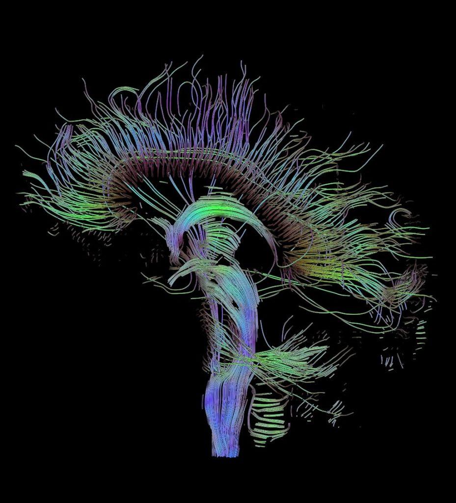 estructura mental