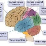 Neurología y rendimiento deportivo